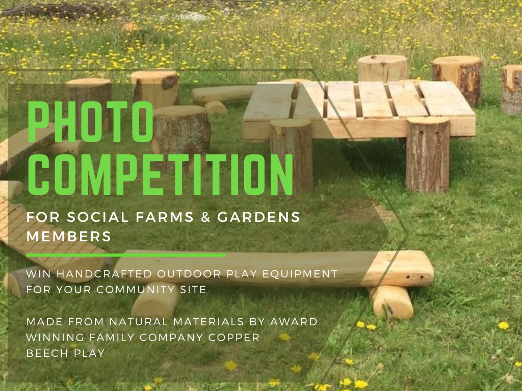 photo_competition_sfg_and_copper_beech_play_2.png